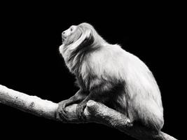 Dívky s nízkým sebevědomím jsou jako opičky