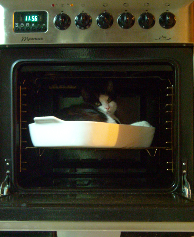 cat_in_the_oven_by_runshin-d4up6hp