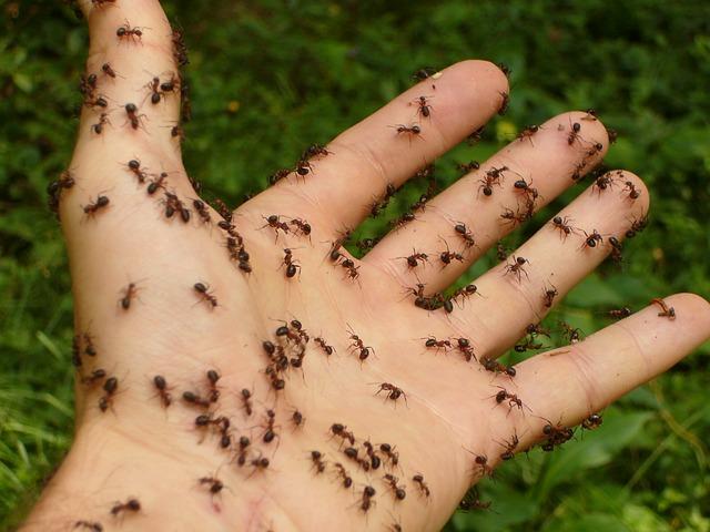Jak se na jaře zbavit mravenců?